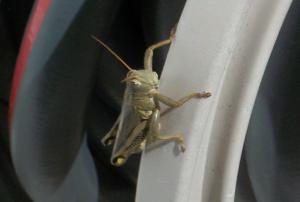 Grasshopper - Nombre Une