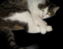 Abu the Cat