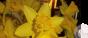 Álainn: The Beauty of a Daffodil (& briefupdate)